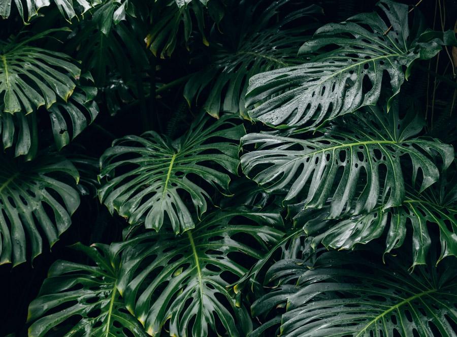 about plants 2