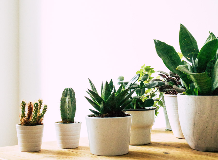 about plants 4