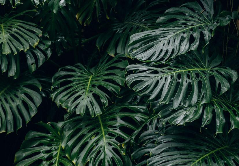 about plants 5