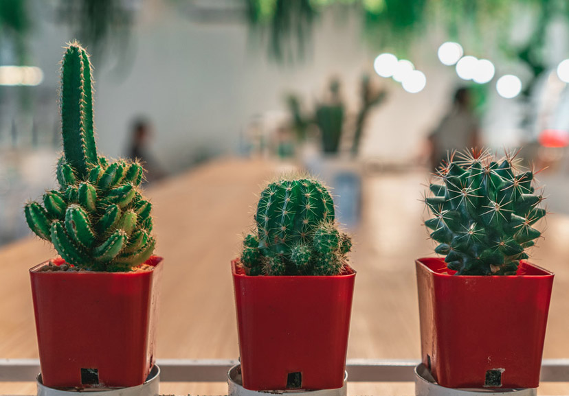 about our plants and cactus