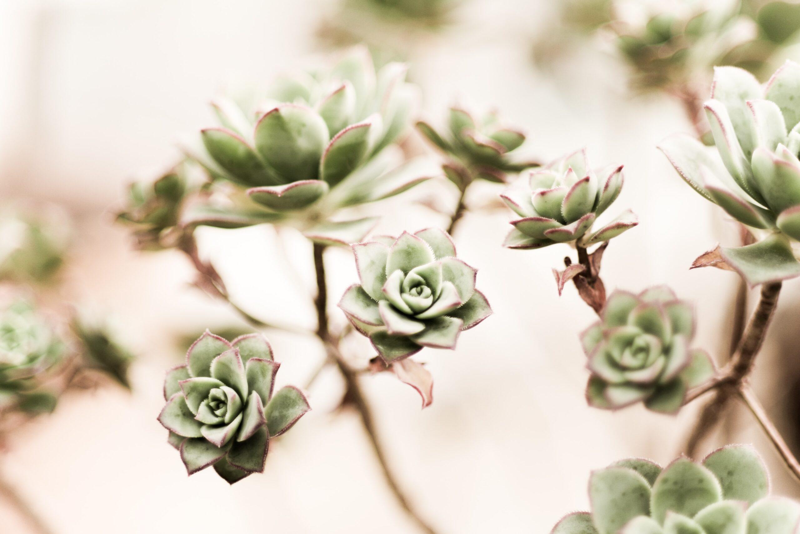 about succulents 9