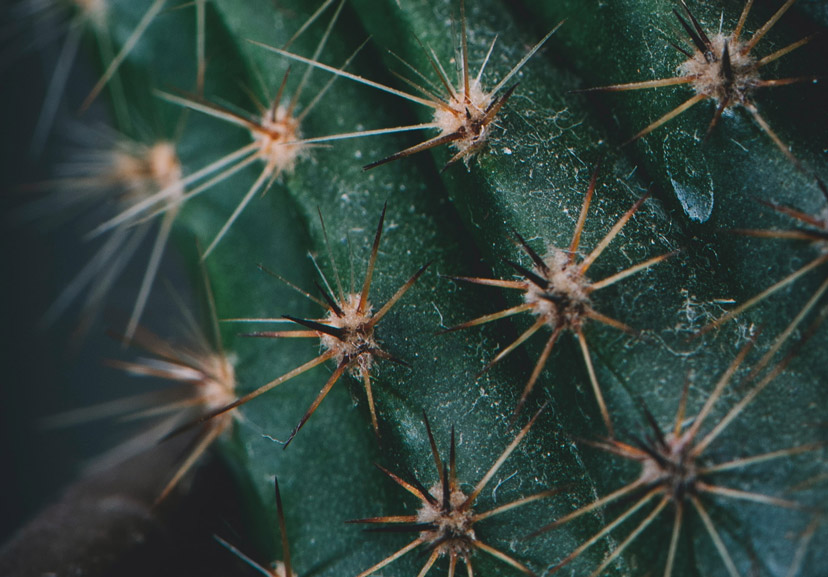 about cactus 3