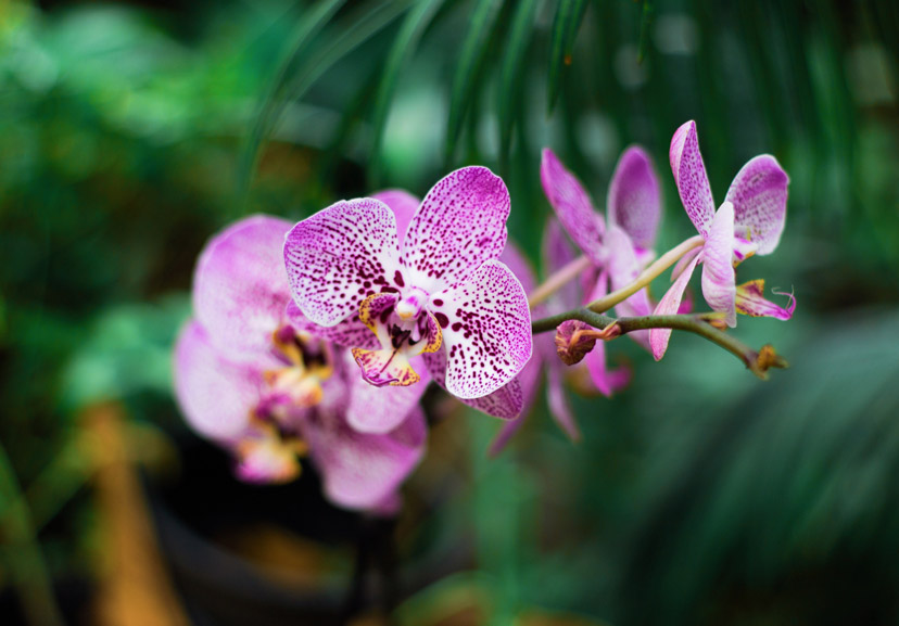 about orchids 3