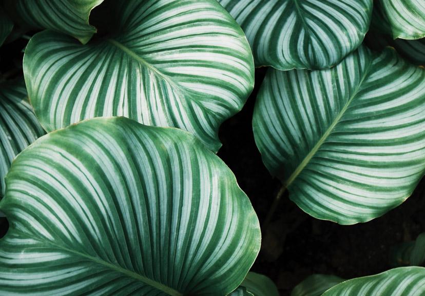 about plants 1