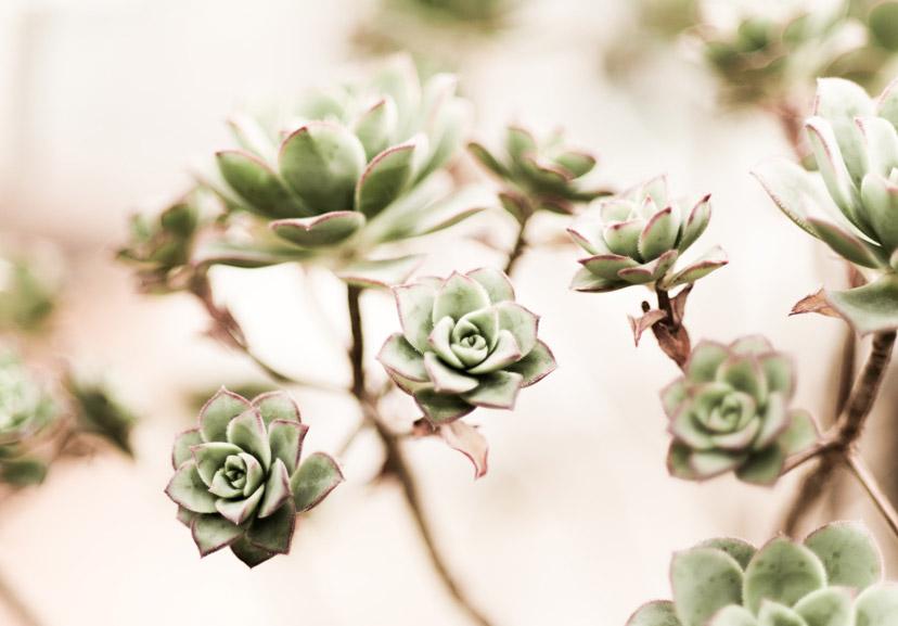 about succulents 6