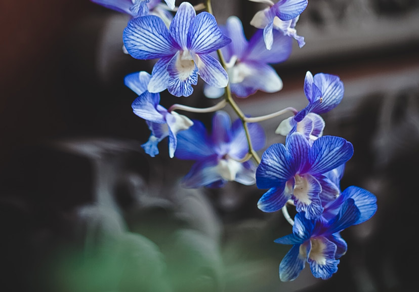 about orchids 1