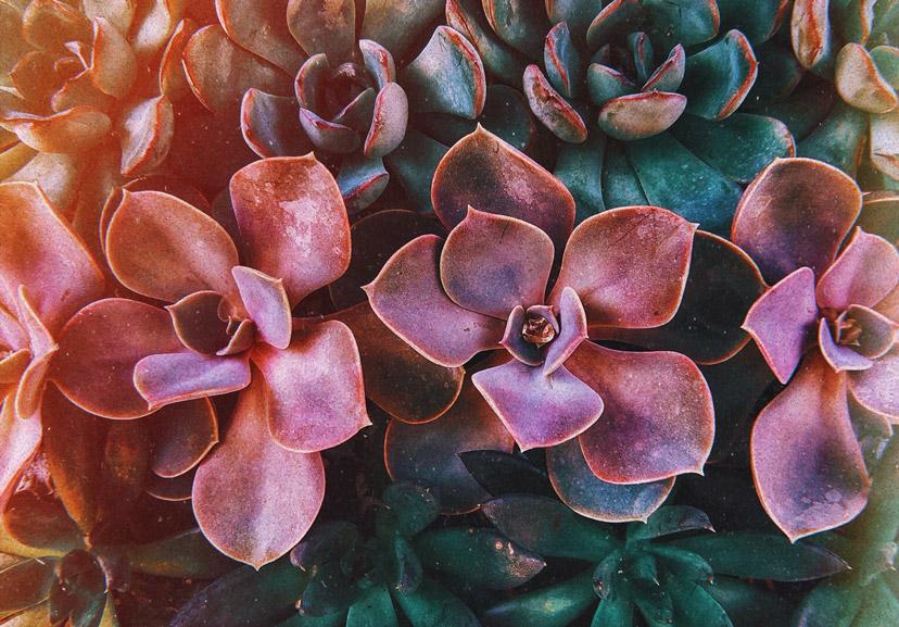 about succulents 4