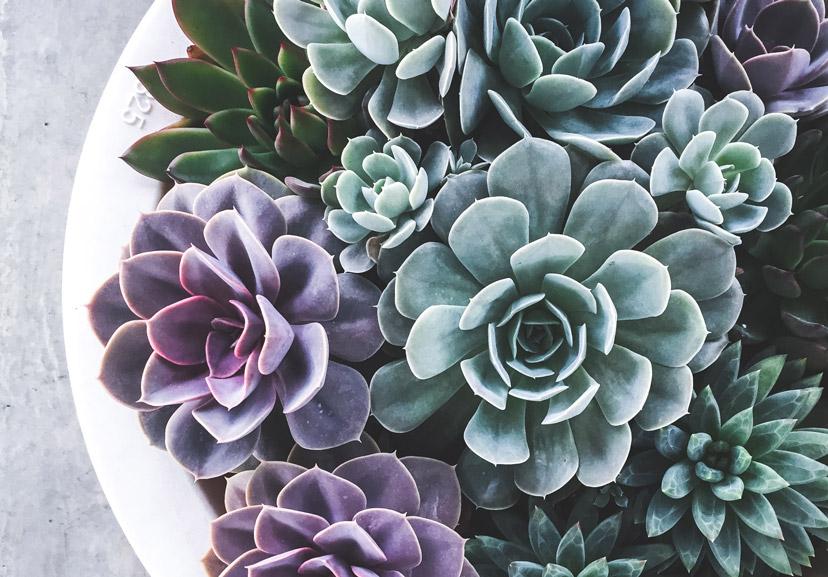 about succulents 3