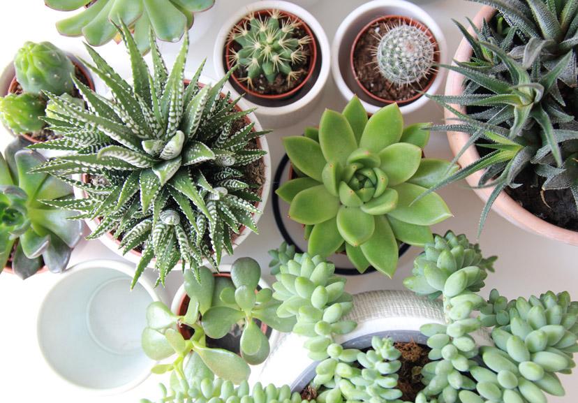 about succulents 2